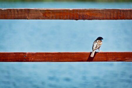 Bruine vogel op rood hek; Photo by Dan on Unsplash