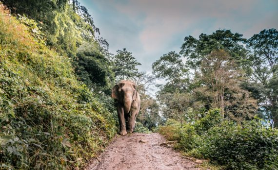 Olifanten laten sporen achter in het landschap: olifantenpaadjes