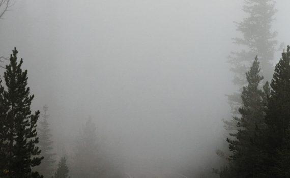 weg tussen bomen verdwijnt in de mist