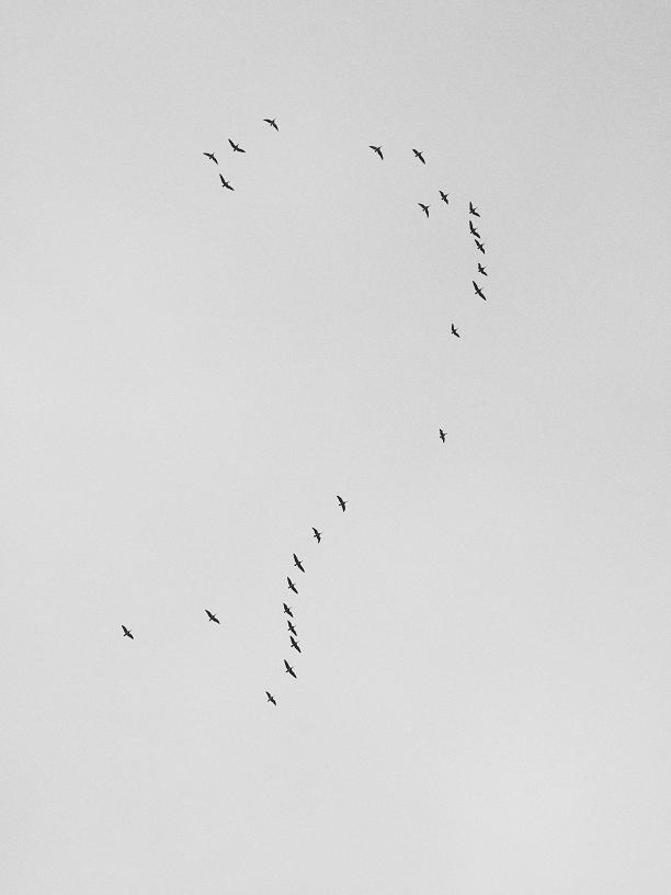 Vlucht vogels in de vorm van een vraagteken