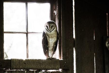 Uil zit voor een raam waar licht door komt; wijsheid?